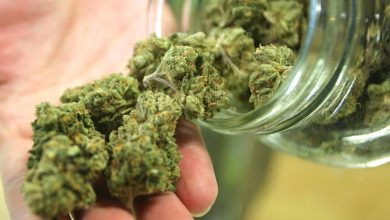 EVERYTHING YOU NEED TO KNOW ABOUT MARIJUANA IS RIGHT HERE