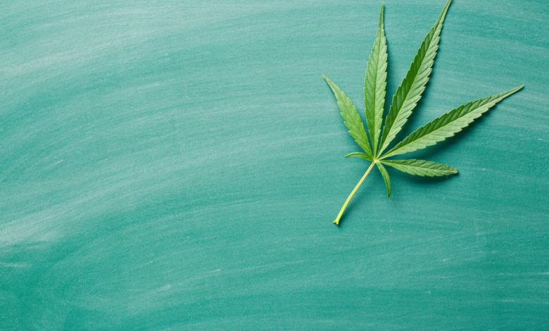 Cannabis-Consulting